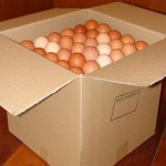 This is our packed Box Of Eggs with our reusable trays.