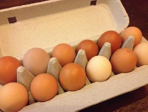 Open_Carton_eggs_TomsPaddock