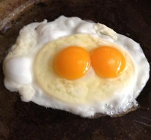 Paddock Eggs